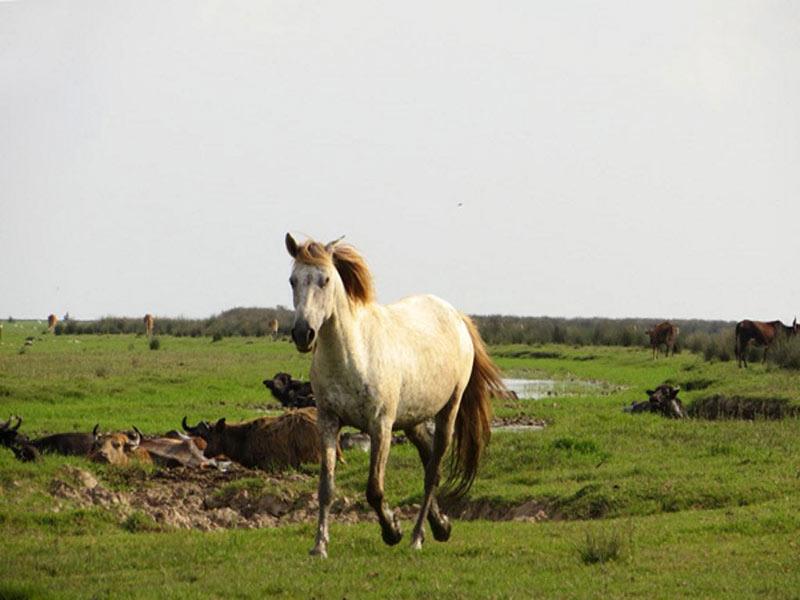 پارک ملی بوجاق